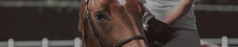 Horse Riding coaches